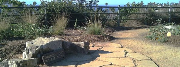 College bluff with plants and path overlooking ocean